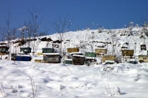 apiary-87692