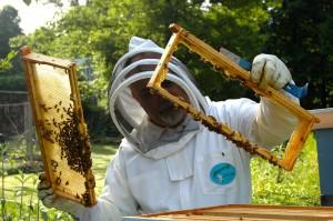beekeeper-682943