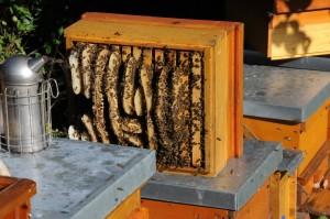 honeycomb-827475